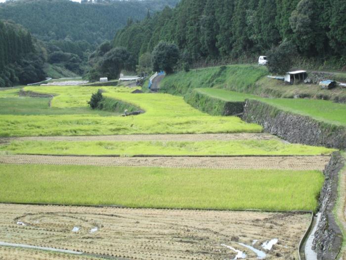 上野の棚田