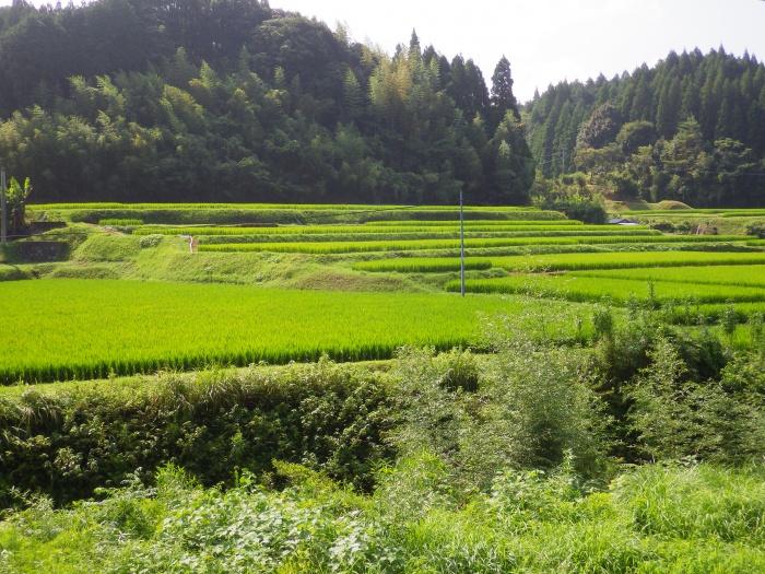 萩之元の棚田