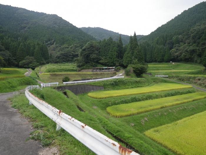 武野の棚田