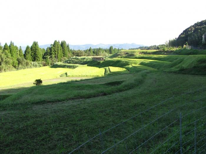 片野の棚田