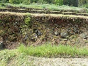 清掃前の石垣